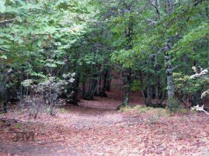 Turismo rural beneficios para la salud mental